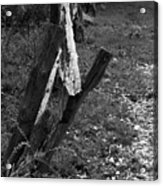 Momsvisitfence2 Acrylic Print