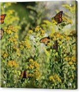 Monarch 6 Acrylic Print