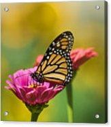 Monarch 9 Acrylic Print