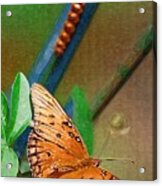 Monarch And Caterpillar Acrylic Print