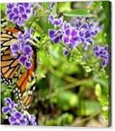 Monarch And Purple Flowers Acrylic Print
