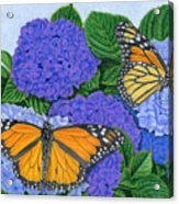 Monarch Butterflies And Hydrangeas Acrylic Print