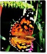 Monarch Butterfly # 2 Acrylic Print