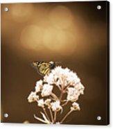 Monarch Butterfly 4 Acrylic Print