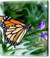 Monarch Butterfly 4 Acrylic Print