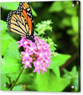 Monarch Butterfly And Honey Bee Acrylic Print