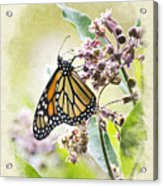 Monarch Butterfly Blank Note Card Acrylic Print