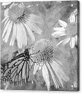 Monarch Butterfly In Black And White Acrylic Print