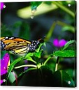 Monarch Buttefly Acrylic Print