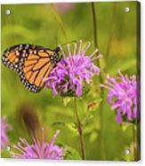 Monarch Butterfly On Bee Balm Flower Acrylic Print