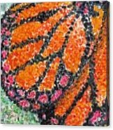 Monarch Butterfly On Ocotillo Blossom Acrylic Print