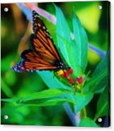 Monarch Heaven Acrylic Print
