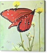 Monarch On Milkweed Acrylic Print