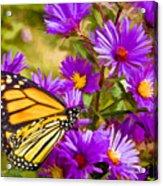 Monarch On Mt. Washington Acrylic Print
