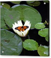 Monarch On Waterlily Acrylic Print