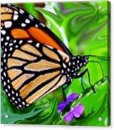 Monarch Swirl 1 Acrylic Print