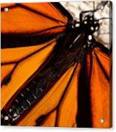 Monarch Triangles Acrylic Print