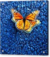 Monarchs Mating Acrylic Print