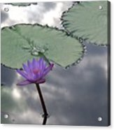 Monet Lily Pond Reflection  Acrylic Print