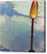 Monet Water Lily Stem Red Orange Acrylic Print