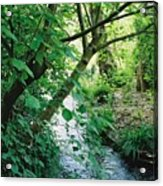 Monet's Garden Stream Acrylic Print
