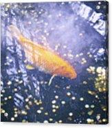 Money Koi Acrylic Print