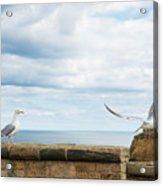 Monitored Seagull Take-off Acrylic Print