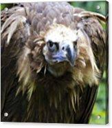 Monk Vulture 3 Acrylic Print