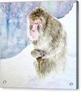 Monkey In Meditation Acrylic Print