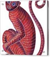 Monkey Acrylic Print