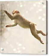 Monkey Jump Acrylic Print
