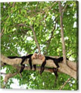 Monkey Love Acrylic Print