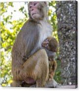 Monkey Mom Acrylic Print