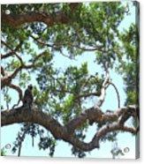 Monkey People Watching Acrylic Print