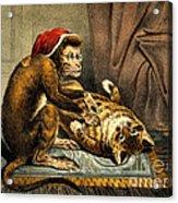 Monkey Physician Examining Cat For Fleas Acrylic Print