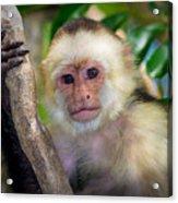 Monkey Portrait Acrylic Print