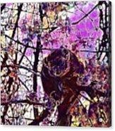 Monkey Tree Zoo Animals Nature  Acrylic Print