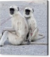Monkeys Acrylic Print