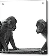 Monkeys Getting Ready For Fight At Chinese Temple Acrylic Print