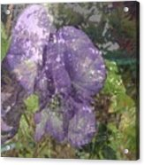 Monkshood Acrylic Print