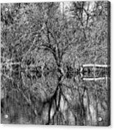 Monochrome Autumn Reflections Acrylic Print
