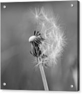 Monochrome Beauty Acrylic Print