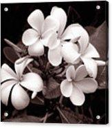 Monochrome Hawaii No. 3 Acrylic Print