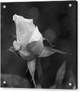 Monochrome Rose Acrylic Print