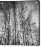 Monochrome Sunset Trees Acrylic Print