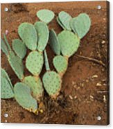 Monsoon Prickly Pear Acrylic Print