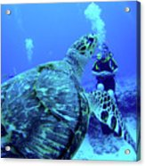 Monster Turtle Attacks Jeanne Acrylic Print