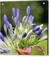 Montana Flower  Acrylic Print