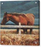 Montana Mare Study Acrylic Print
