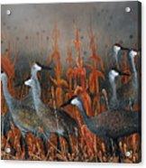 Monte Vista Sandhill Cranes Acrylic Print